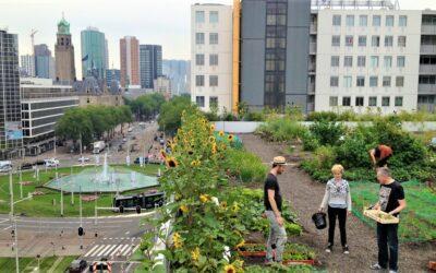 De Binckhorst wordt een stukje groener in 2021